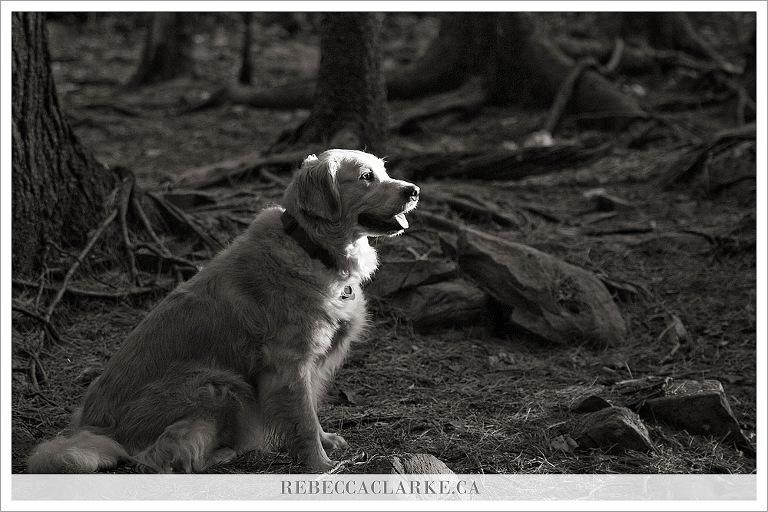 Ashley the dog 02