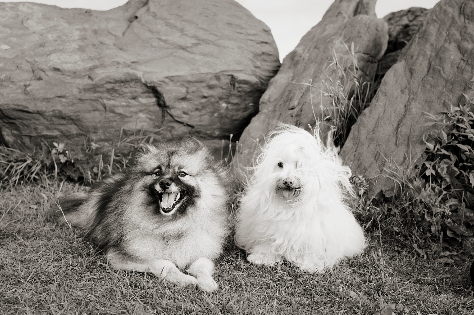 Dog portraits Halifax Nova Scotia