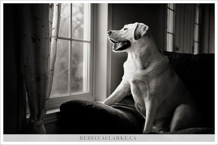 Levi dog