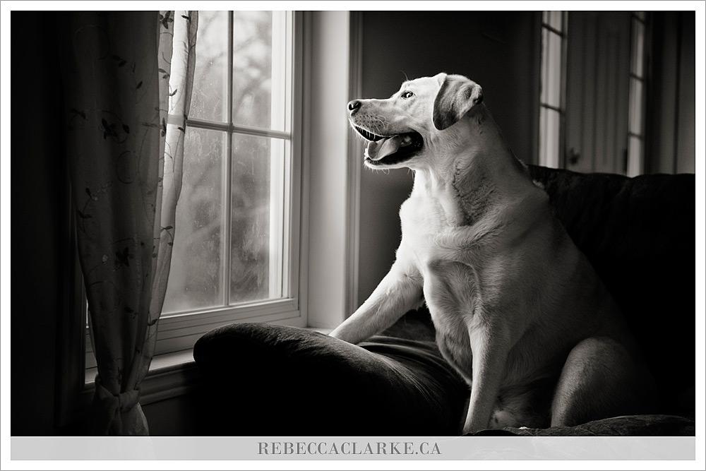 Levi Dog 02