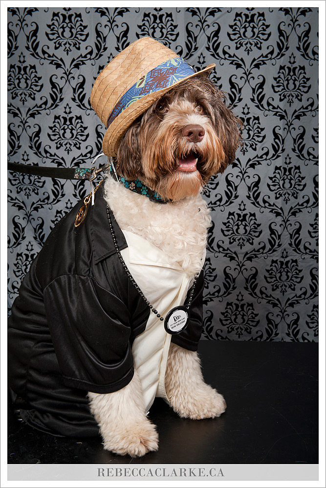 Doggie Styles 01