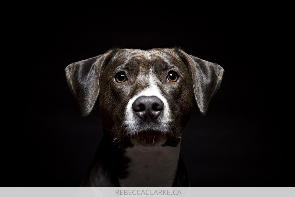 Ruby Dog